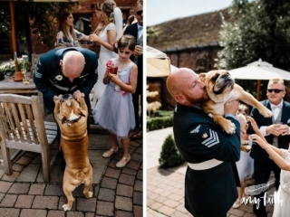 Groom holding and picking up his bulldog to give her a kiss and cuddle