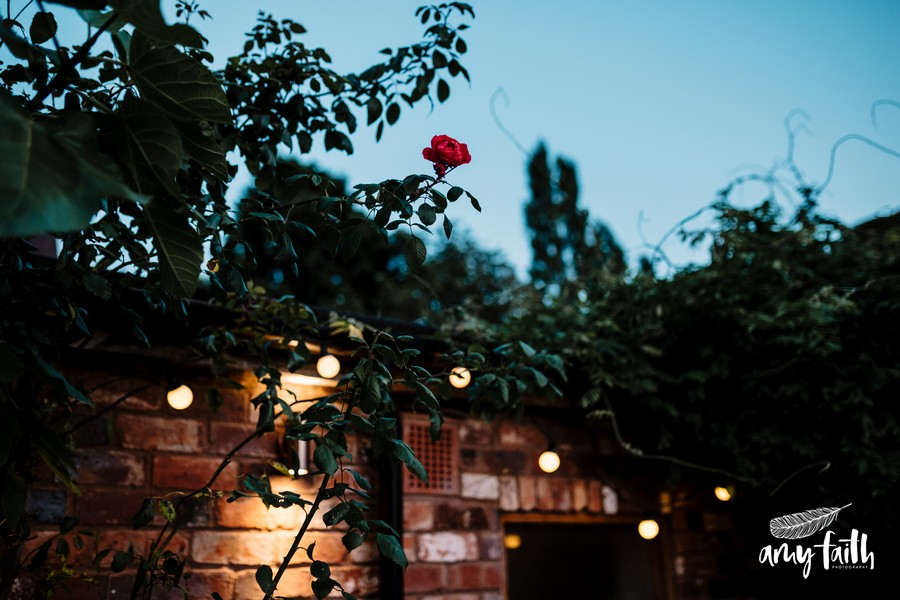 Single red rose growing up wall framed by night sky and lit by festoon fairy lights