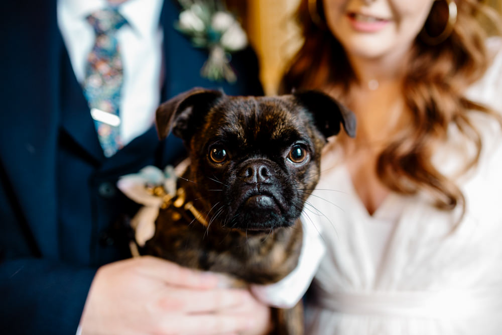 A close up of a brussels griffon dog in front of a bride and groom.